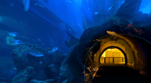 Fischtunnel.jpg