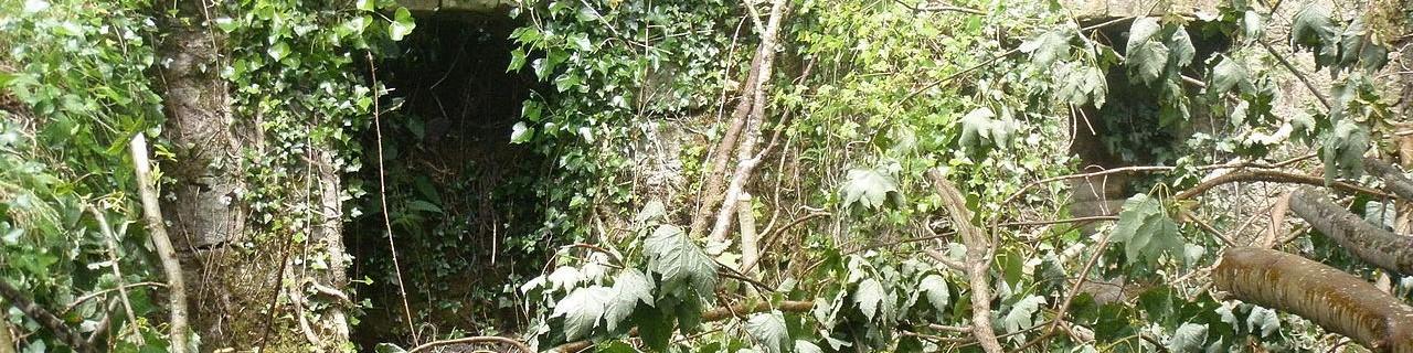 Overgrown_Ireland-mani.jpg